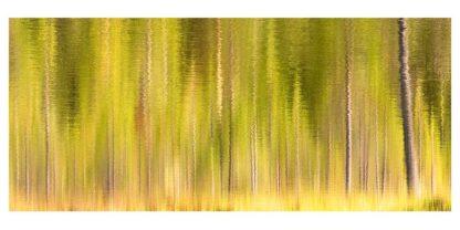 Verzerrte Aufnahme eines Herbstwaldes