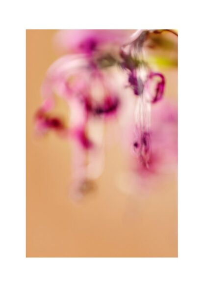 Unscharfe pink Blüten auf braunem Grund