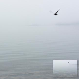 Im Nebel angedeutetes Meer und Inseln mit einem Vogel, der die Szenerie überfliegt