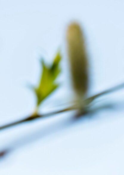 Unscharfe aufgenommenes Bild von zwei Zweigen
