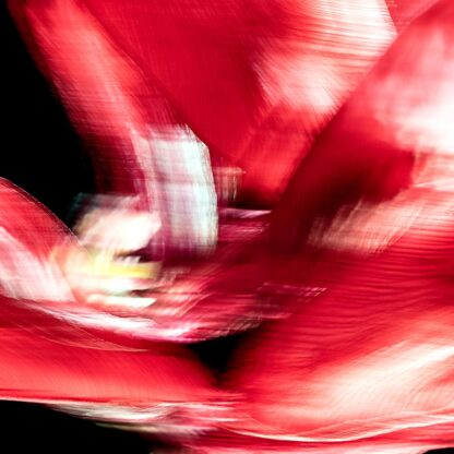 Enger Ausschnitt einer roten Tulpe in Bewegung