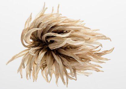 Vertrocknete Blume wie vom Winde zerzaust