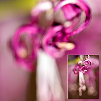 Unscharfe Blüte in kräftigem Violett